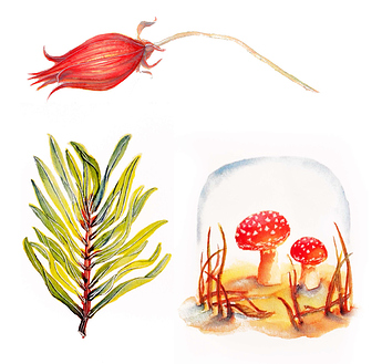 WatercolorIllustrationsNature