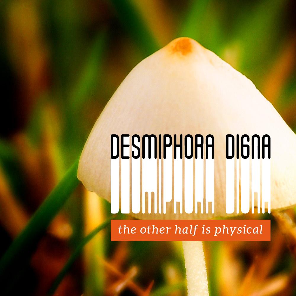 Desmiphora Digna