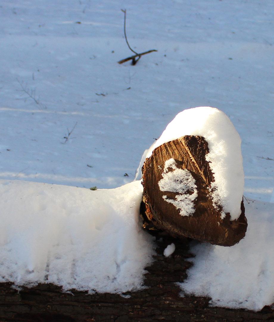 snowskull_onlogcut