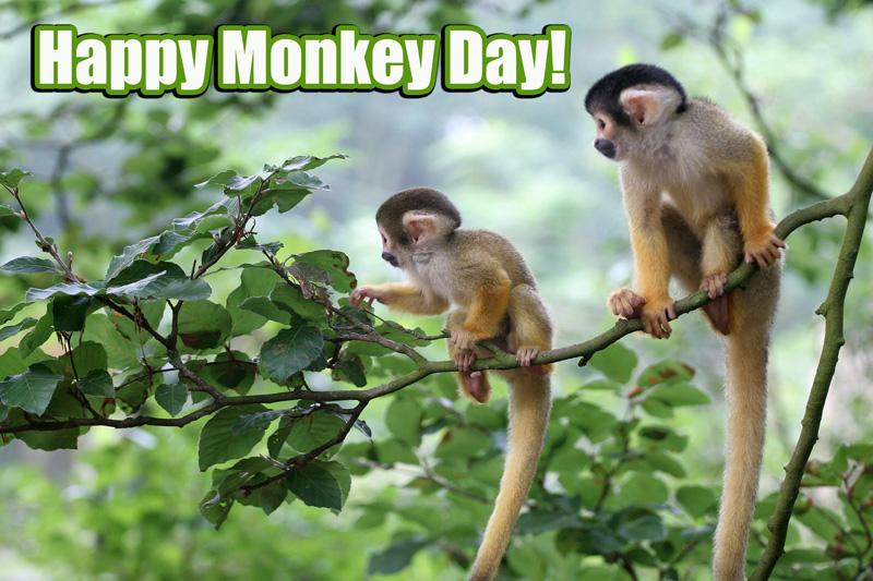 monkey-day1