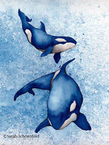orca_blue_600