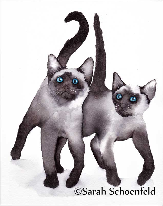 Siamese_cats_two800