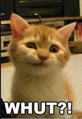 whut kitty