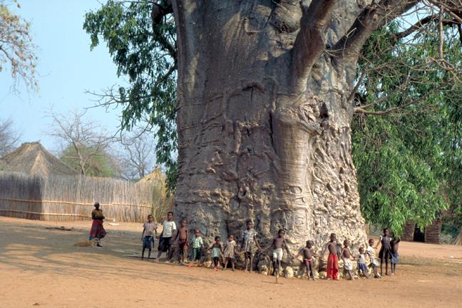 Baobab-children
